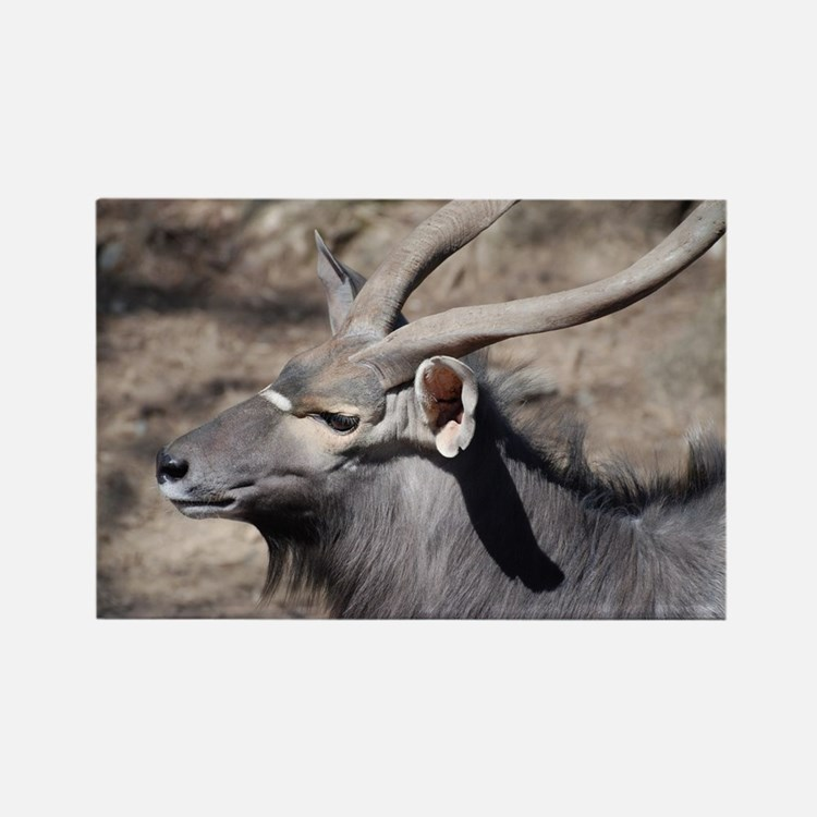 Nyala with Horns Rectangle Magnet