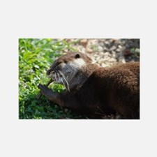 River Otter Chewing on a Stick Rectangle Magnet