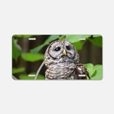 Gray Owl Aluminum License Plate