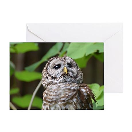 Gray Owl Greeting Card