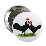 Whitefaced Spanish Chickens 2.25