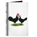 Whitefaced Spanish Chickens Journal