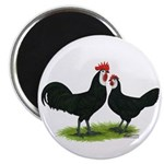 Whitefaced Spanish Chickens Magnet