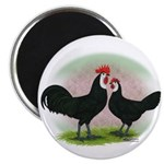 Whitefaced Spanish Chickens2 Magnet