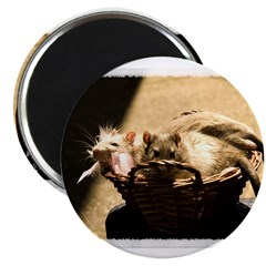 Sun and Shadow Rats Magnet