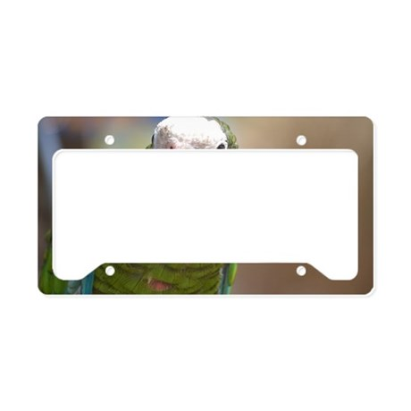 Curious Conure License Plate Holder