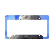 Itching Grey Parrot License Plate Holder