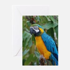 Blue an Gold Macaw on a Branch Greeting Card