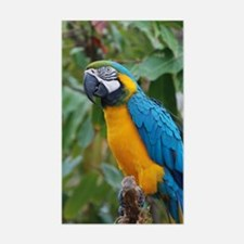 Blue an Gold Macaw on a Branch Decal