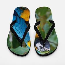 Blue an Gold Macaw on a Branch Flip Flops