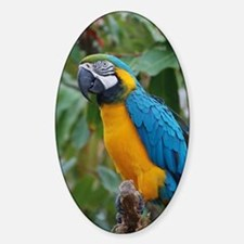 Blue an Gold Macaw on a Branch Sticker (Oval)