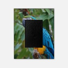 Blue an Gold Macaw on a Branch Picture Frame