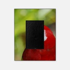Scarlet Macaw Picture Frame