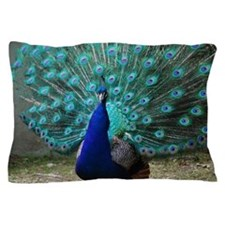 Peacock Plummage Pillow Case