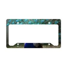 Peacock Plummage License Plate Holder