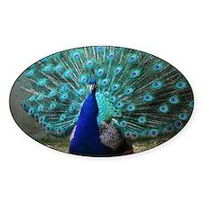 Peacock Plummage Decal