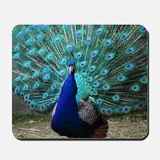 Peacock Plummage Mousepad