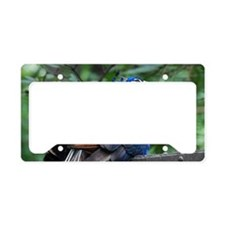 Nesting Peacock License Plate Holder