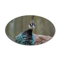 Brown and Aqua Peafowl Wall Decal