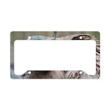 Peafowl with Ruffled Feathers License Plate Holder