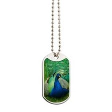 Pretty Peacock Dog Tags