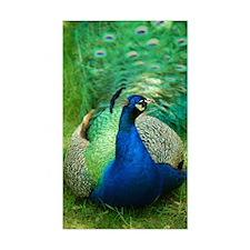 Pretty Peacock Decal