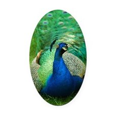 Pretty Peacock Oval Car Magnet