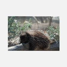 Sleeping Porcupine Rectangle Magnet