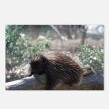 Sleeping Porcupine Postcards (Package of 8)