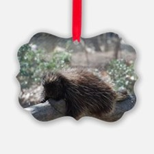 Sleeping Porcupine Ornament