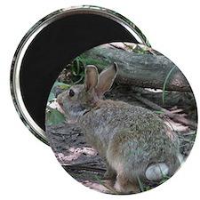 Wild Rabbit Magnet