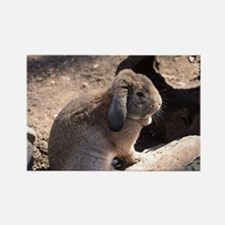 Cute Rabbit Rectangle Magnet