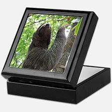 Tree Climbing Sloth Keepsake Box
