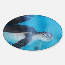 Sea Turtle Baby Decal