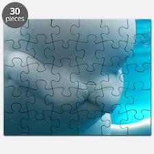 Wild Beluga Whale Puzzle
