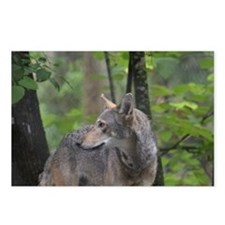 Wild Timber Wolf Postcards (Package of 8)