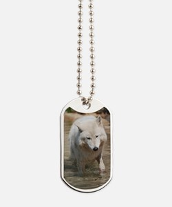 Sweet White Wolf Dog Tags