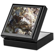 Petrified Wood Keepsake Box