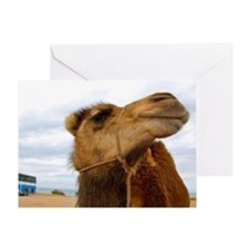 Moroccan Camel Greeting Card