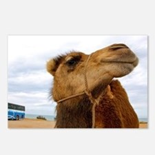 Moroccan Camel Postcards (Package of 8)