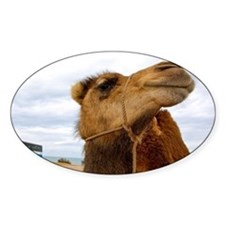Moroccan Camel Decal