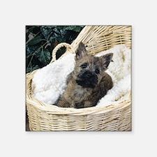 Cairn Terrier Pup Sticker