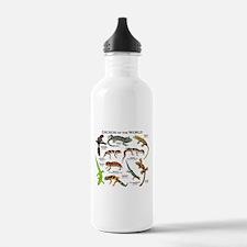 Geckos of the World Water Bottle