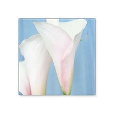 Tango Calla Lily Photo Sticker