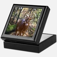 Woodland Buck Deer Keepsake Box
