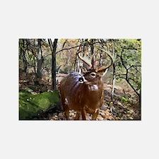 Woodland Buck Deer Rectangle Magnet