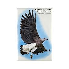 Grey-Headed Fish Eagle Rectangle Magnet