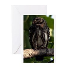 Asian Barred Owlet Portrait Greeting Cards
