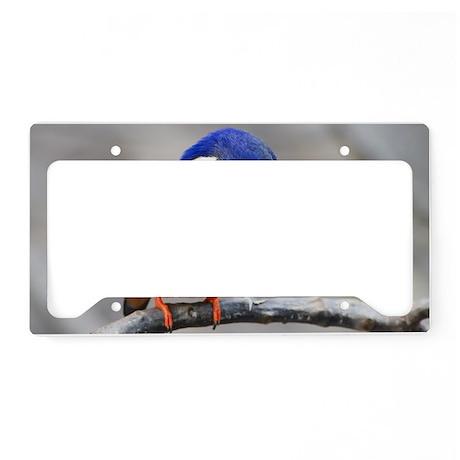 Azure Kingfisher License Plate Holder