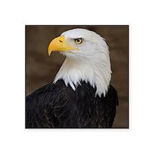 """Bald Eagle Portrait Square Sticker 3"""" x 3"""""""